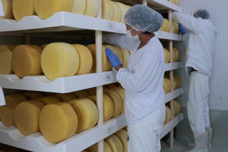 secagem-queijo